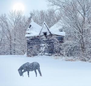 Jeffrey-Gardner_Snow-Horse-52420